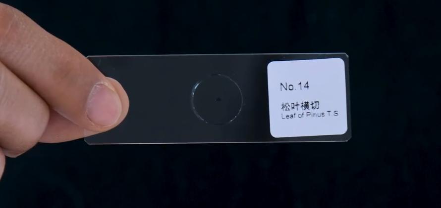 Redmi官方魔改K30 Pro:彻底变身显微镜